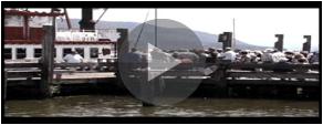 River Rose on HV WebTV